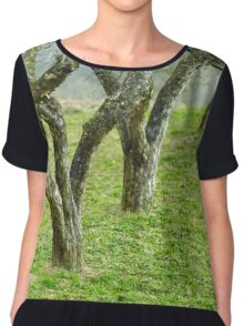 Apple trees in an orchard Chiffon Top