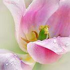 Kiss of Spring by Nadya Johnson