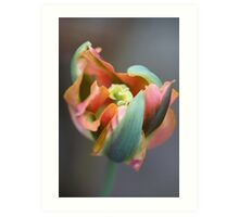 A different Tulp Art Print