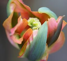 A different Tulp by walstraasart