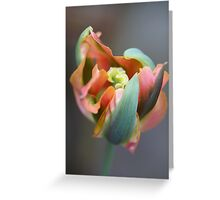 A different Tulp Greeting Card