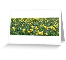 field.of.daffodils Greeting Card