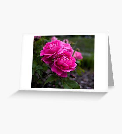 Edmonton Roses Greeting Card
