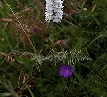 Irish Wildflower Calendar [veryireland.com]   by George Row