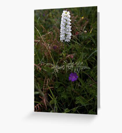 Irish White Orchid, Inishmore Greeting Card