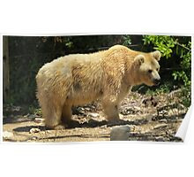 Soggy Bear Poster