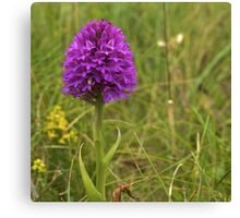 Pyramidal Orchid, Inishmore, Aran Islands  Canvas Print