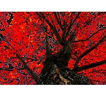 Red Tree Fall Photographic Print