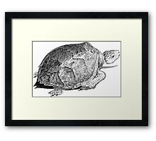 Drudge Reptile  Framed Print