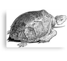 Drudge Reptile  Canvas Print