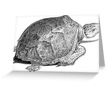 Drudge Reptile  Greeting Card