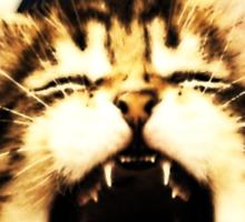 Kitten Triangle Sticker