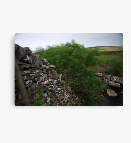 Long Exposure of a Tree Canvas Print