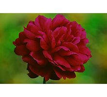 Red Rose Bokeh Photographic Print