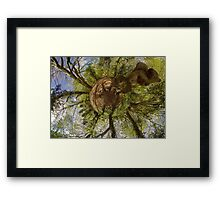 Squirrel Sculpture on path through Prehen Woods,  Derry Framed Print