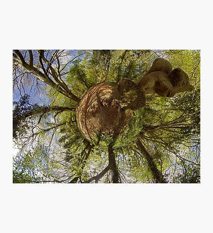 Squirrel Sculpture on path through Prehen Woods,  Derry Photographic Print