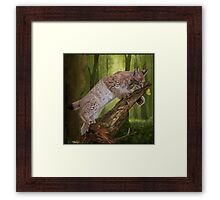 The Lynx and a Butterfly Framed Print