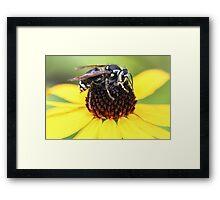 Hornet and Cone Flower Framed Print