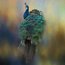 Peacock by KathleenRinker