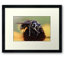 Hornet and Cone Flower Closeup Framed Print