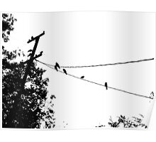 Crows on a wire Poster