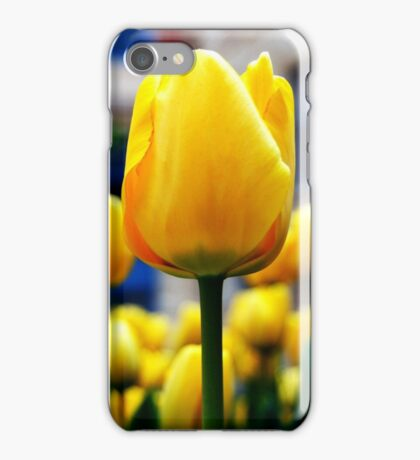 Tulips (Horizontal) iPhone Case/Skin