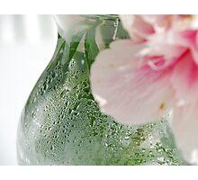 Peony in a Vase Photographic Print