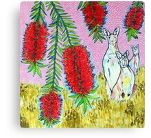 Kangaroos with Bottlebrush Canvas Print