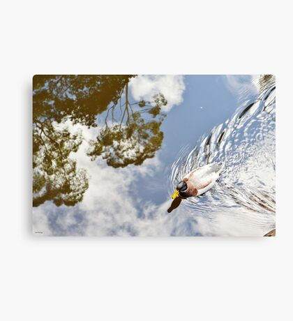 One Little Duck Canvas Print