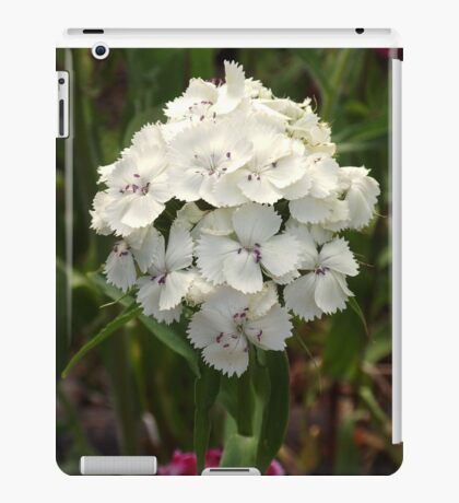 White Sweet William                                             Pentax X-5 MP    iPad Case/Skin