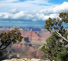 Grand Canyon - South Rim by Kris  Kennedy
