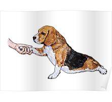 Human hand holding beagle's leg Poster
