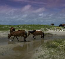 wild horses at shackleford banks, NC by johnlackphoto