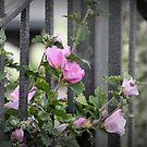 Through the Fence by mercale