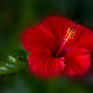 Red and green by flexigav