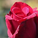 Red Plants by Richard Keech