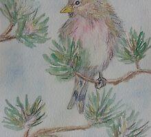 Little Bird by Sonja Peacock