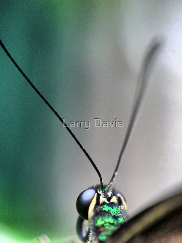 Butterfly at Santosa  (1)..macro. by Larry Lingard-Davis