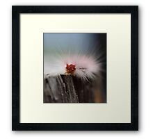 Caterpillar checkin' things out Framed Print