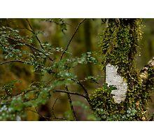Moss Photographic Print