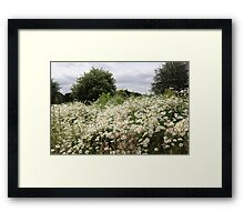 Daisies and trees Framed Print