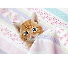 Cute Ginger Tabby kitten Photographic Print