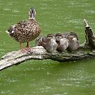 TAKING CARE of MY BROOD by Marilyn Grimble