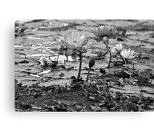 Aquatic Blooms (B & W)  Canvas Print