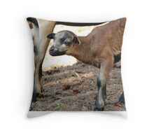 Cameroon Baby Sheep Throw Pillow