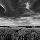 Across the fields from Marsham by David Hawkins-Weeks