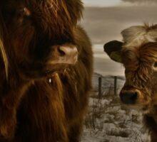 Highland Cows Sticker