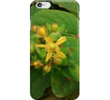 Wild yellow flower iPhone Case/Skin