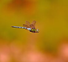 Flight of the Dragon by NaturesEarth