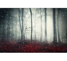 Spaces VII - Dreaming Woodland Photographic Print